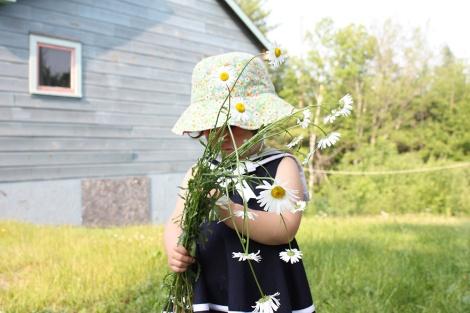 daisies_2