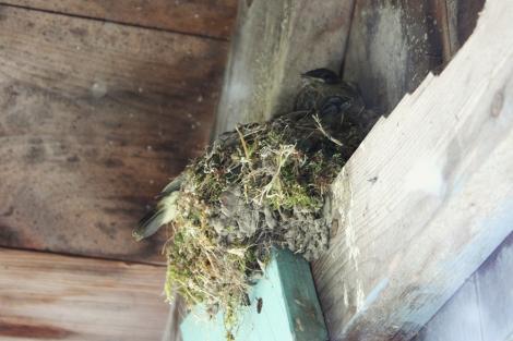 baby_birds2